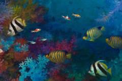 Tropical Fish #3 10.13x20